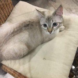 Photo d'un chat - Magnétiseur pour animaux