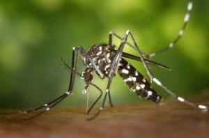 Prévenir les piqûres de moustiques. La suite de l'article précédent sur les piqûres d'insectes et plus particulièrement les piqûres de moustiques...