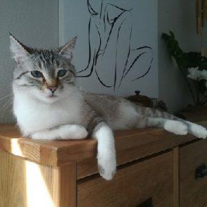Léo the Cat
