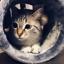 Chat-Animaux de compagnie-Soins à distance pour animaux